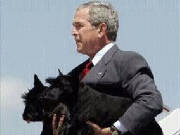 bushwithscotties.jpg