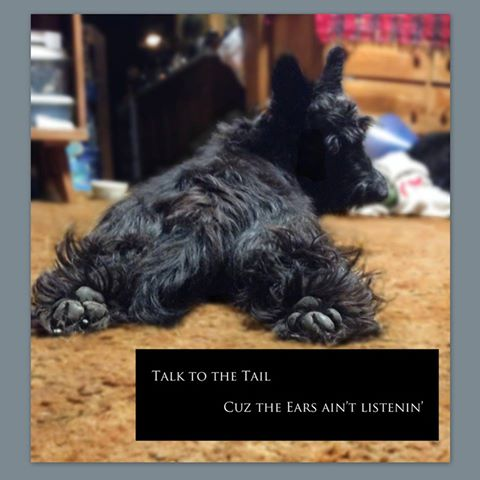 talktothetail2.jpg